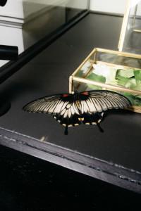Презентация капсульной коллекции заколок и сотуаров Insecta украшения Dzhanelli Jewellery House